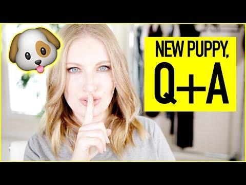 MEET OUR NEW PUPPY 🐶 | INSTAGRAM Q+A!