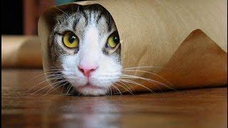 Смешные картинки про кошек и котят Выпуск № 3 FUNNY CATS СМЕШНЫЕ КОШКИ