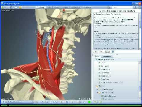 3D Anatomy Head & Neck for Dentists/Dentistry - YouTube