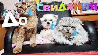 Последнее видео кота Кевина, Билли, Ариелы, котят | теперь всё по-новому!