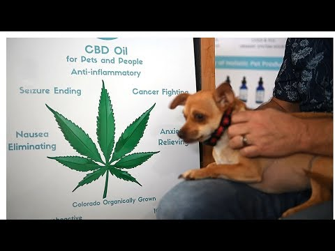 cbd-dogs-treats.-hemp-for-dogs