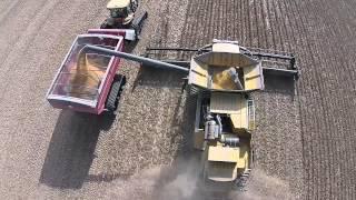 T K FARMS ,SOYBEAN HARVEST ,DARKE CO. OHIO, CLAAS LEXION 750 on tracks with 40ft. MacDon Draper Head