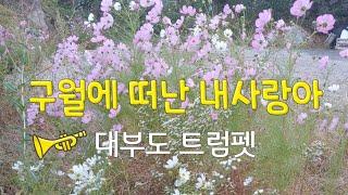 9월에 떠난 사랑-(유익종)#대부도 트럼펫#권인영아트갤…