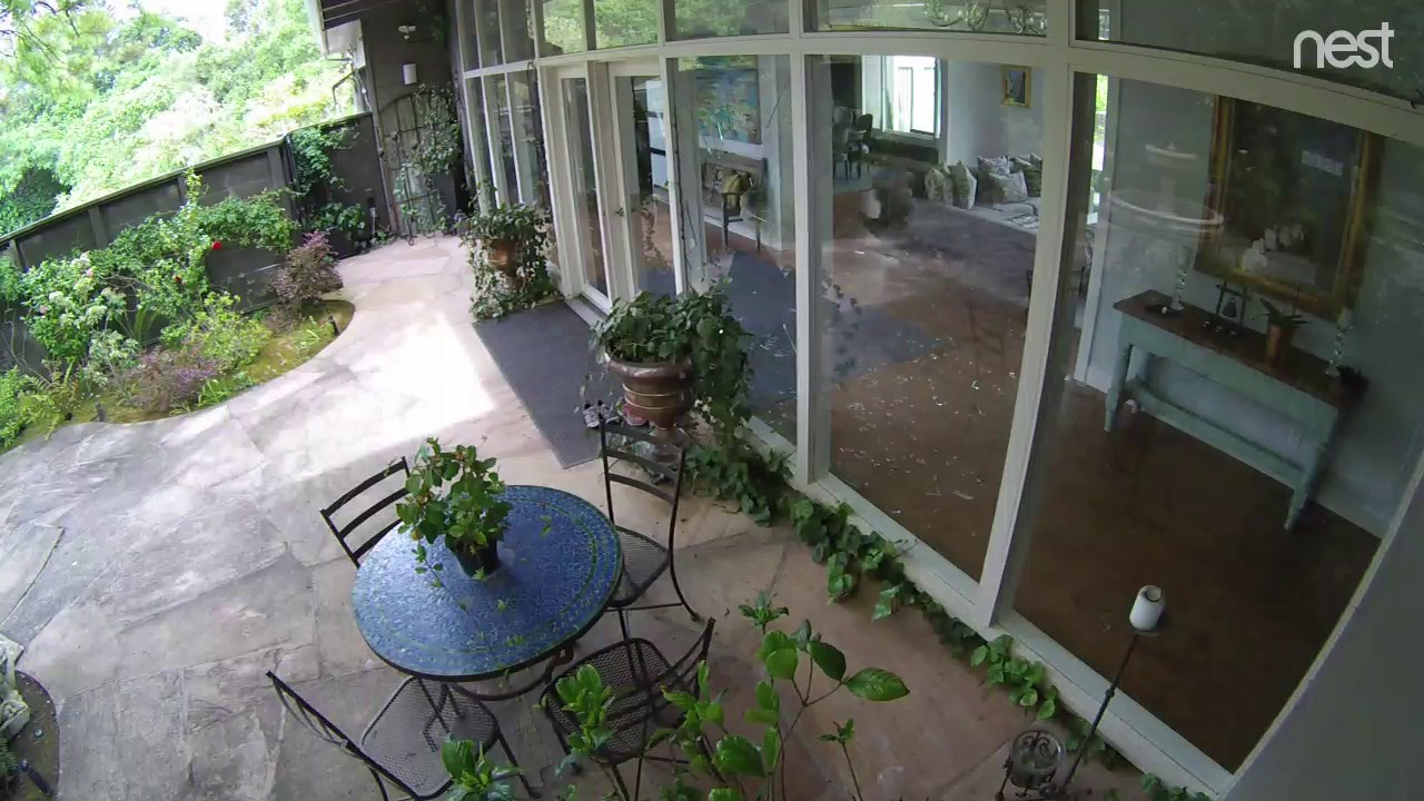 Funny Video: Nest Cam Captures Turkey Flying Through Glass