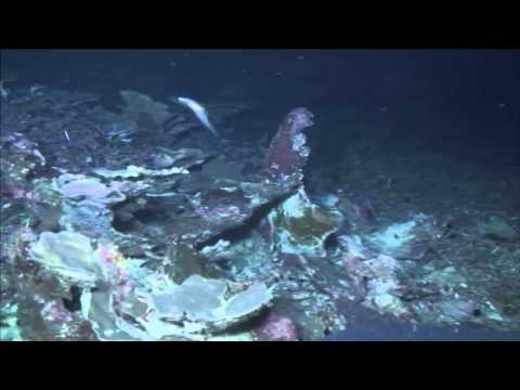 Test ROV Dive - Falkor