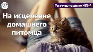 Короткая медитация на исцеление домашнего питомца (Ева Ефремова)