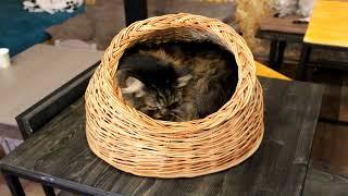 Как обустроить место для отдыха кошки