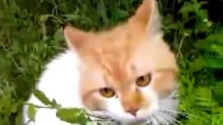 Кот наркоман сказал: Ооооооо, чуваки! =) [P.L.].mp4