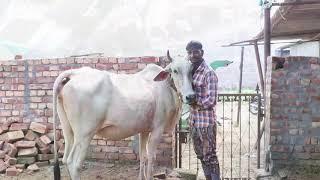 #trending1 Ganesh utsav bhagal (RSP Films)