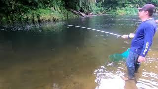 Download lagu A melhor pescaria de lambari é no litoral do Parana, no Paraíso dos Lambaris