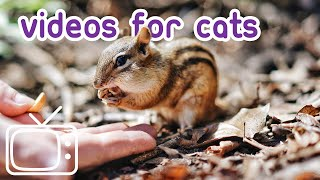 Videos for Cats  Chipmunks, Squirrels and Birds Galore!