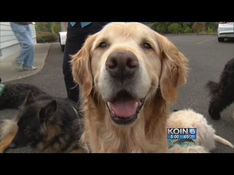 Roseburg therapy dogs 'help process of healing'