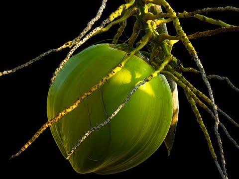 Episode 194 - Busting Coconut Oil Myths