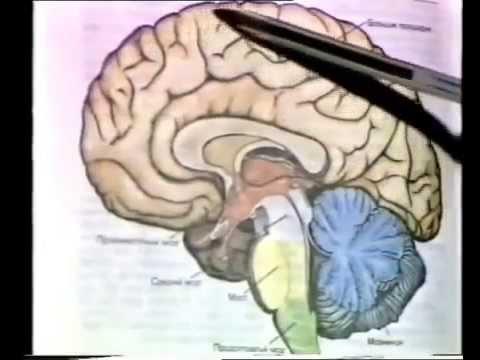 Гипоксия головного мозга – кислородная мозговая