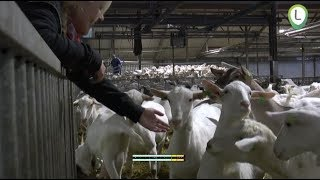 Lammetjesdag op geitenboerderij Twiegweerd bij Zalk