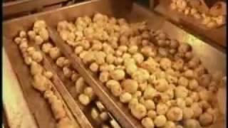 كيفية صناعة شرائح البطاطس (الشبس) في المصانع Making Chips