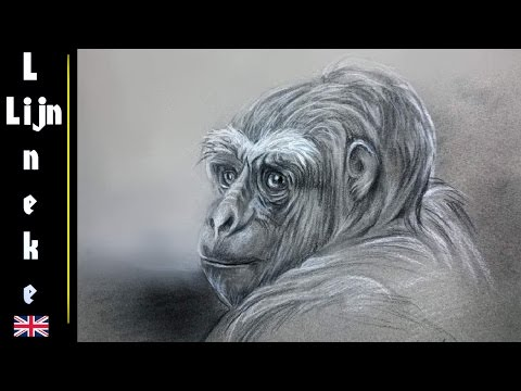 Drawing a GORILLA with Charcoal and white pastel pencil