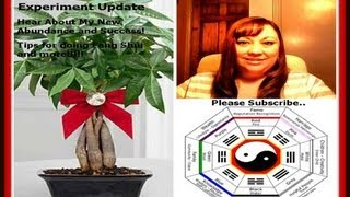 Feng Shui For Success 30 Day Experiment Two Week Update