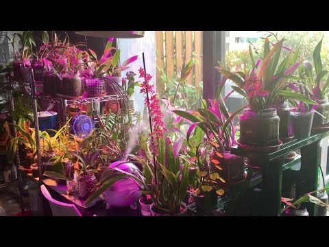 Unboxing - Orchid Haul from Orchid Garden and Indoor Grow Space Tour - October 2016