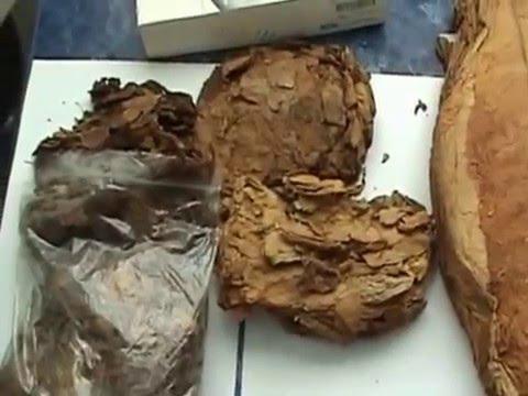 Выращивание табака посадка рассады. - YouTube