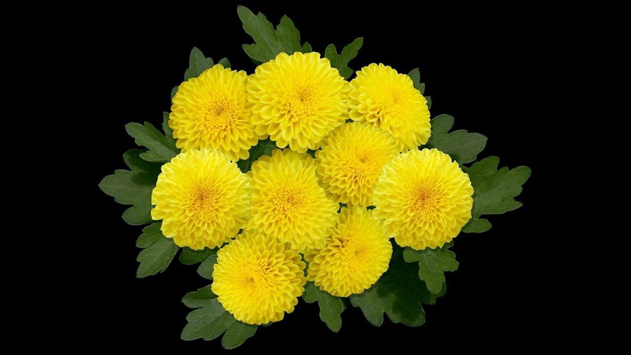 Cultivos de plantas medicinales y ornamentales tvagro for Plantas ornamentales y medicinales