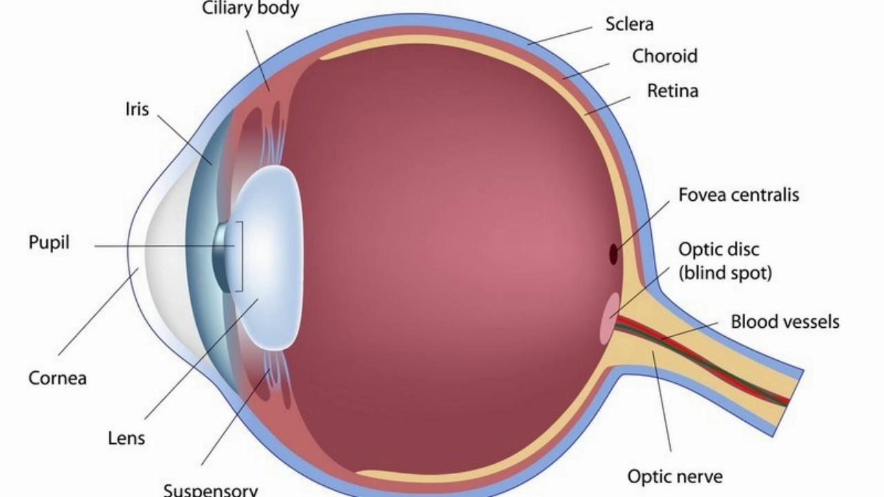 myopia és hyperopia, amikor megjelentek)