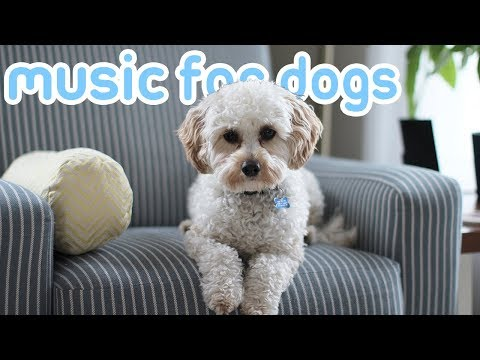 15-hours-of-deep-soothing-anxiety-music!-helped-over-10-million-dogs!-new!