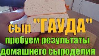Домашний сыр - сыр ГАУДА (пробуем результаты)