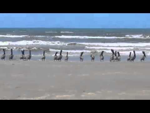Pelican school