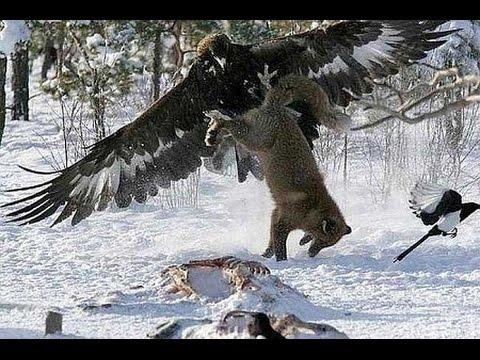 Đại bàng săn mồi