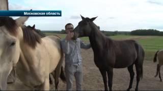 В Московской области неизвестные украли из частной конюшни четырех породистых лошадей