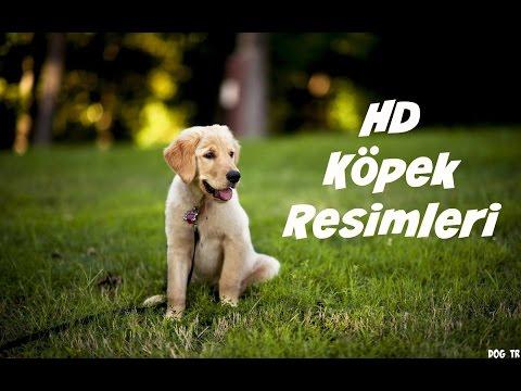 HD • Köpek Resimleri