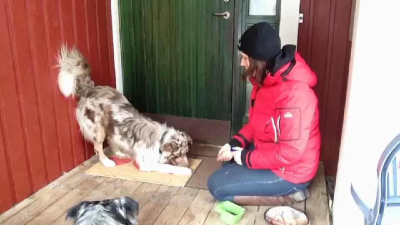 Train Dog To Wipe Paws