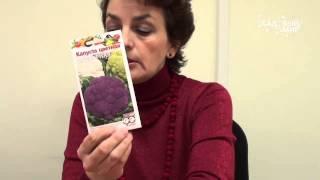 Фитоспорин  защита растений от болезней. Сайт