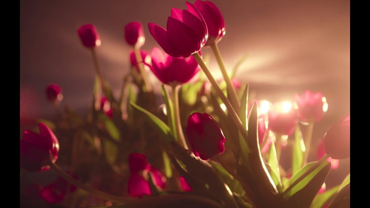 Видео-вальс цветов