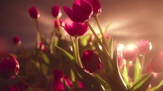 видео вальс цветов из балета щелкунчик
