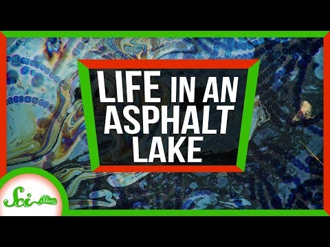 Secrets of Life from A Giant Pool of Asphalt | Weird Places: Pitch Lake, Trinidad