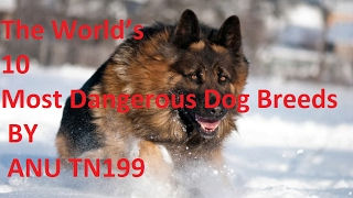 The World's 10 Most Dangerous Dog Breeds BY ANU TN199 |Husky | Bullma