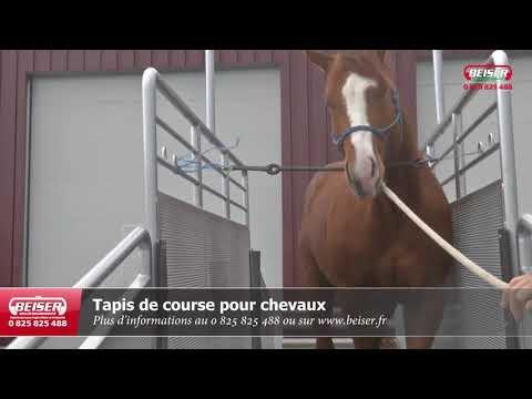 Tapis de course électrique pour chevaux