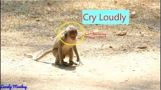 Pitiful Poor Orphan Jessie Cry Very Loudly Cos 0f Popeye & Merry| Thank Dana Quick Help Jessie..