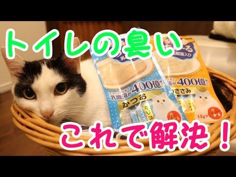 猫のトイレの臭いはコレで解決原因を元から断つ