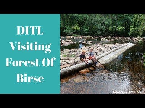 DITL | Forest Of Birse | OddHogg
