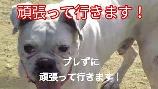 パワーブリード #ボクサー犬 #愛護活動 いつもご視聴ありがとうございま...