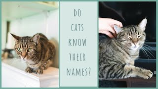 Will my cats respond to their own names?