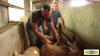 Pour votre élevage ovin