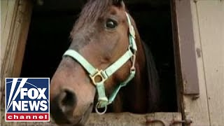 Advocate: Why eating horses would be good for everyone