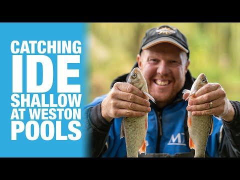 Catching Ide Shallow At Weston Pools
