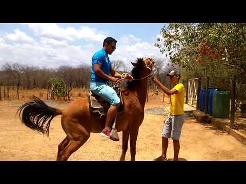 Cavalo bravo