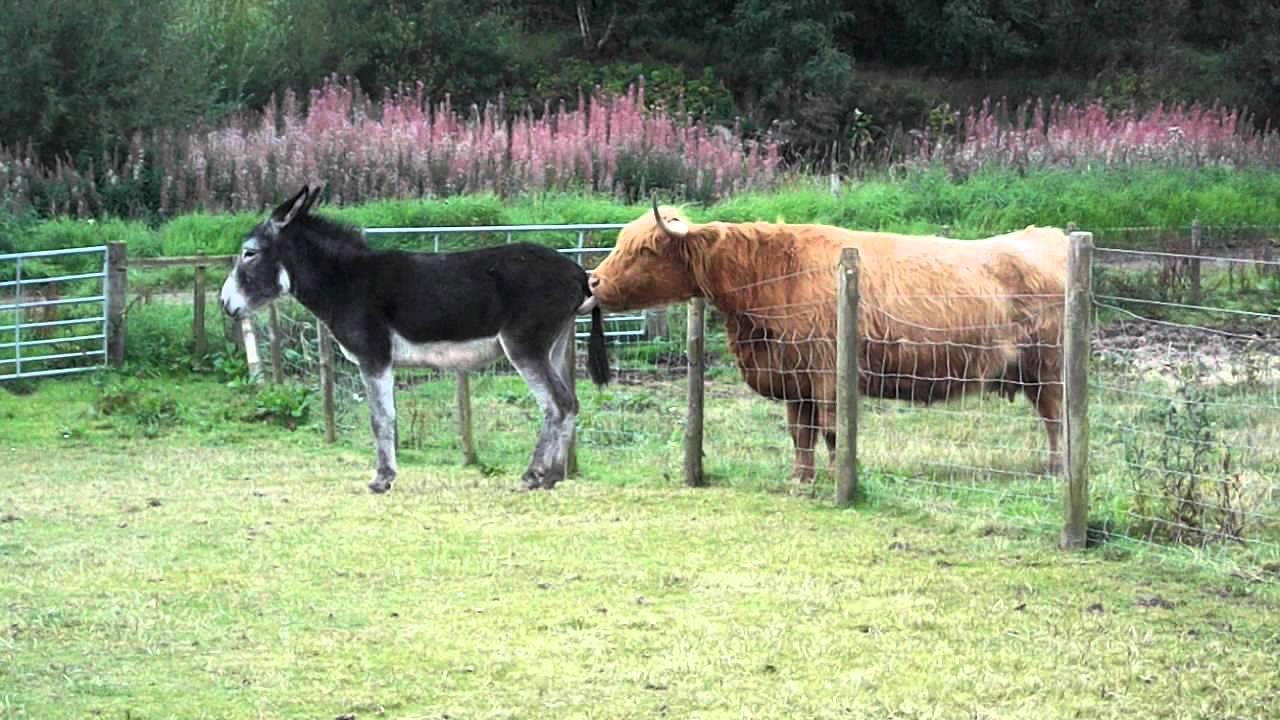 Donkey Bum