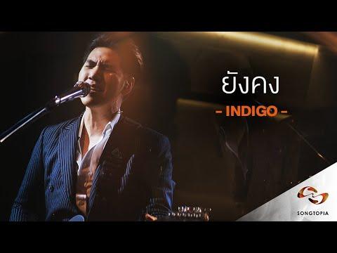 ยังคง - Indigo   Songtopia Livehouse